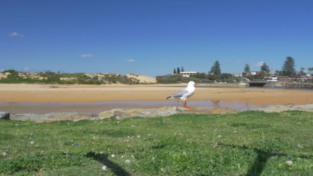vídeos de stock e filmes b-roll de close up lone seagull sits on rock with beach sand dunes in background bird flies away - banco de areia