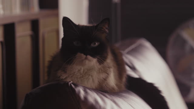 close up lonely cat - cat blinking stock videos & royalty-free footage
