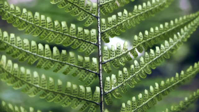 close up look in a forest , fern, green leaves - fern stock videos & royalty-free footage
