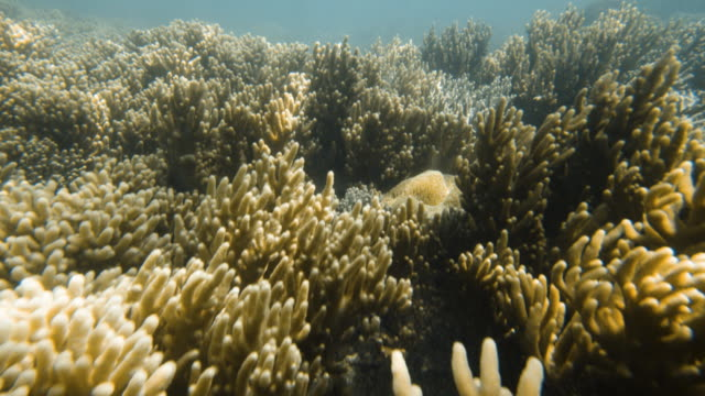 close up look to the coral reefs - aquatic organism stock videos & royalty-free footage