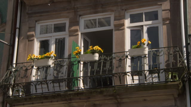 vídeos de stock e filmes b-roll de close up: looking up at flower pots, yellow flowers and windows - parado
