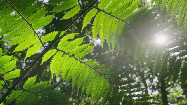 stockvideo's en b-roll-footage met close up low angle panning shot of rain forest leaves / rouseau, dominica - laag camerastandpunt