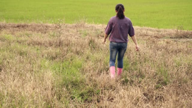 close up low to wide shot pink shoe boot woman farmer walking in rice farm