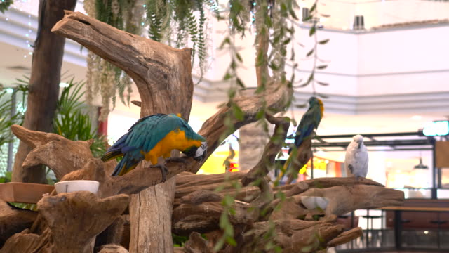 när du tittar på ara fågel - djurbeteende bildbanksvideor och videomaterial från bakom kulisserna