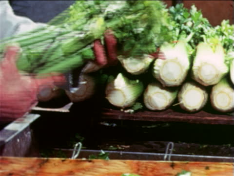 stockvideo's en b-roll-footage met 1965 close up male grocer's hands cutting tops off stalks of celery in store / educational - kruidenier