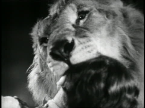 b/w 1949 close up man sticking head in mouth of lion / educational - 1949 stock videos & royalty-free footage