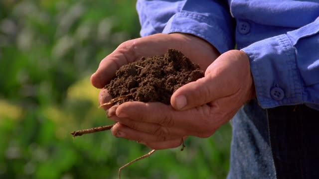 Close up man's hands holding and examining soil / Olympic Peninsula, Washington