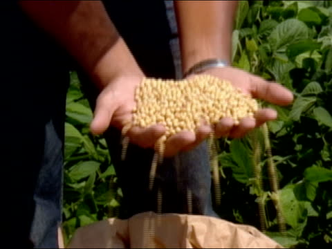 close up man's hands reaching into bag and grabbing handfuls of soybeans and letting them fall through fingers/ man reaching in and grabbing more beans/ zoom in hands/ brazil - soya bean stock videos & royalty-free footage