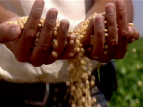 close up man's pan hands reaching into bag of soybeans, grabbing handfuls and letting them fall through his fingers/ scooping more beans/ brazil - soya bean stock videos & royalty-free footage