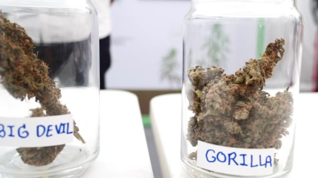 close up marijuana trichromes in the glass - marijuana herbal cannabis stock videos & royalty-free footage