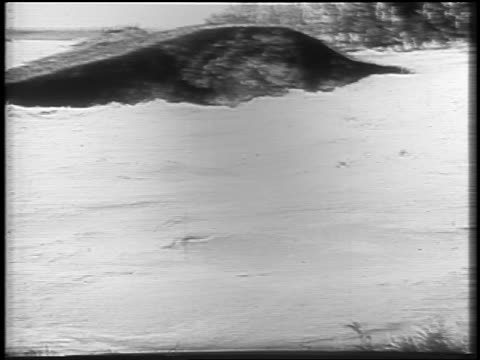 B/W 1927 close up Mississippi River flood waters / newsreel