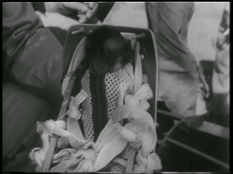 b/w 1952 close up monkey strapped into space capsule seat after flight / new mexico / newsreel - 1952 stock videos & royalty-free footage