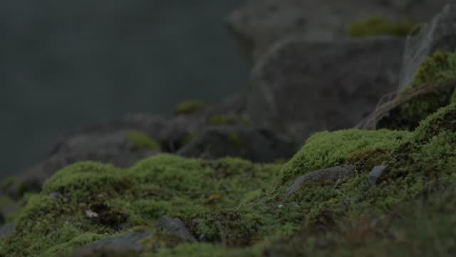 vídeos de stock e filmes b-roll de close up, mossy rocks - reserva selvagem