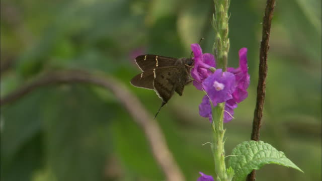 close up; moth on flower - moth stock videos and b-roll footage