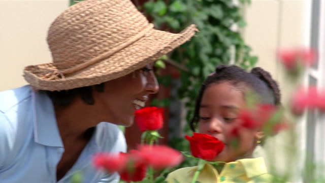 close up mother and daughter shearing roses in garden - pruning shears stock videos & royalty-free footage