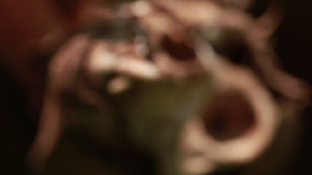 close up of a animal skull going in and out of focus - animal skull stock videos and b-roll footage