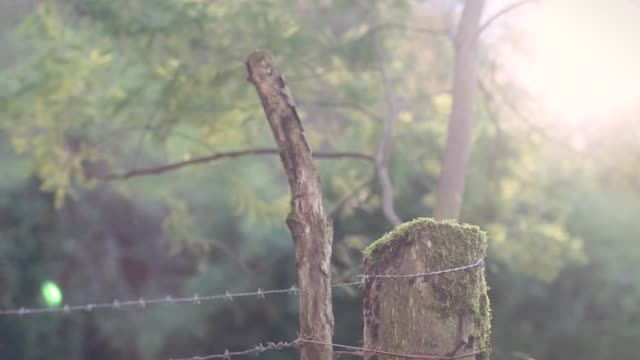 Close up of a barbed wire and a tree trunk in nature with the sun behind