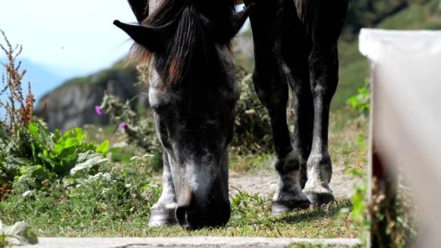 Nahe aufschließen eines schönen grauen Pferdeschweck im Berg, Tiere in der Natur, Wildtiere,