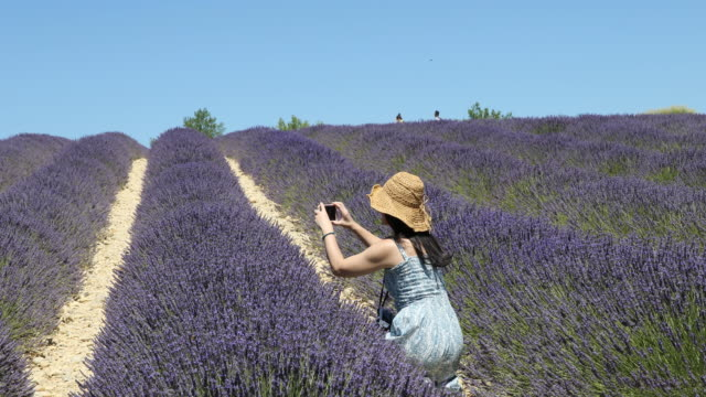 Close up of a beautiful lavender field in the Provence in France near the village Valensole while a tourist from Asia a woman in a blue long dress...