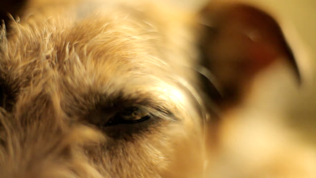 close up of a dog's eye - dog blinking stock videos & royalty-free footage