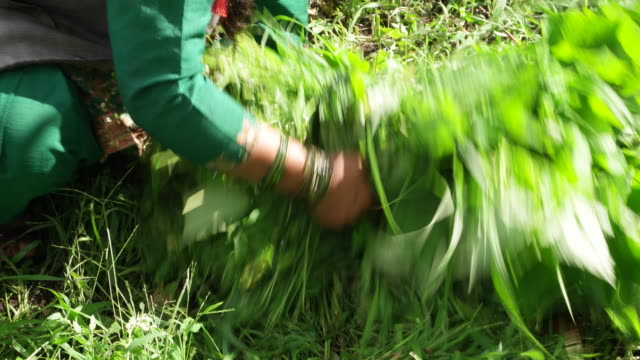 Close up of a female farmer's hands making a bundle of cut weed together