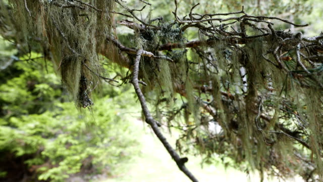 close up of a forest pine tree trunk view - lumber industry stock videos & royalty-free footage