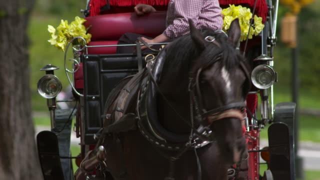 vídeos de stock, filmes e b-roll de close up of a horse and carriage turning towards camera.  - artigo de vestuário para cabeça