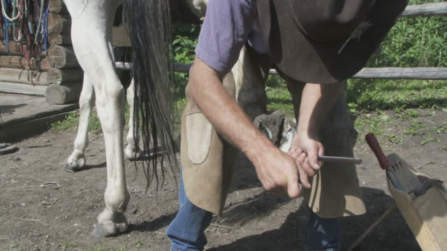 Close up of a horse being shoed