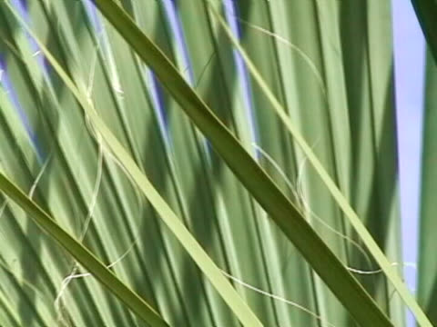 close up of a palm tree frond - frond stock videos & royalty-free footage