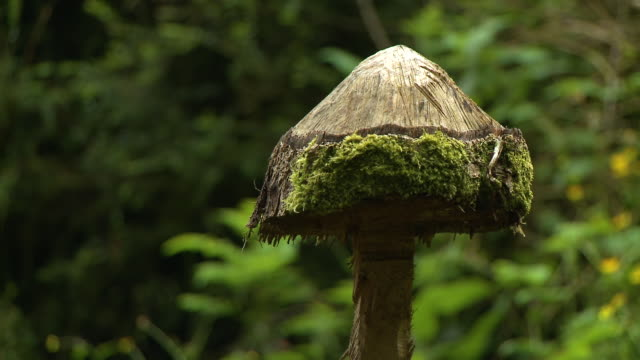 close up of a tree stump carved like a toadstool - axe stock videos & royalty-free footage