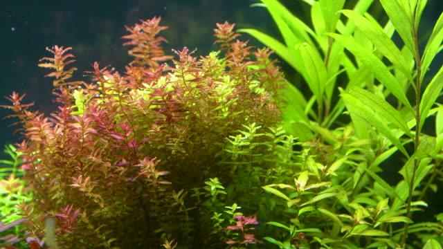 close up of aquatic plant - aquatic plant stock videos and b-roll footage