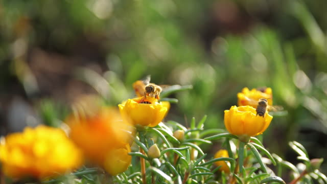 close up of bee and flower - bee stock videos & royalty-free footage