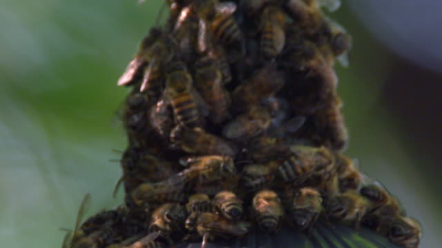 close up of bees crowding on a conical structure - moving image stock videos & royalty-free footage