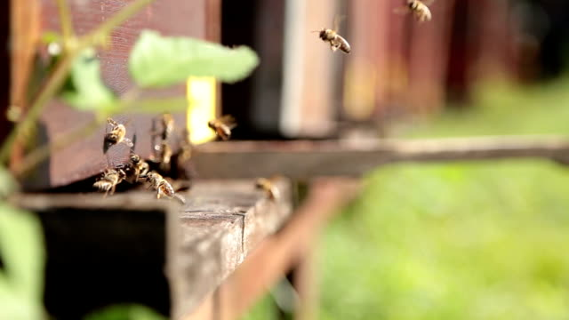 close up of bees in beehives,flying around - beehive stock videos & royalty-free footage