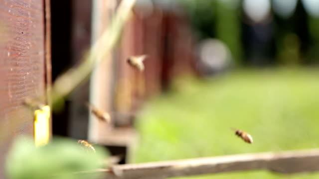 Nahaufnahme von Bienen in Bienenstöcken, herumfliegen