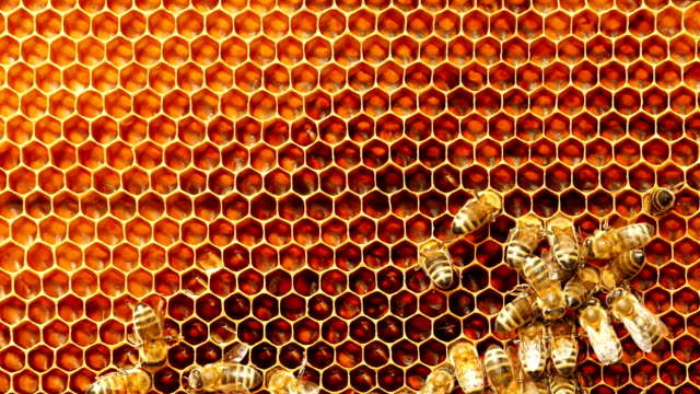 vídeos de stock e filmes b-roll de 4k close up of bees on honeycomb in apiary - abelha