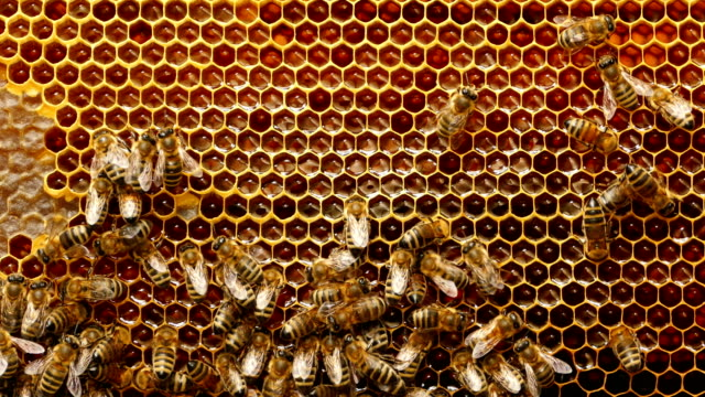 4K Close up of bees on honeycomb in apiary