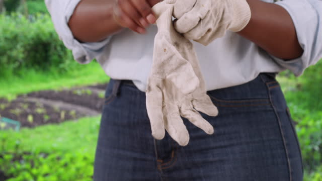 close up of black female's hands as she puts on gardening gloves - jeans stock-videos und b-roll-filmmaterial