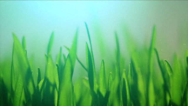 ブレードのクローズアップの芝生 - blade of grass点の映像素材/bロール