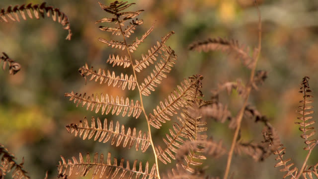 Close up of bracken in autumn