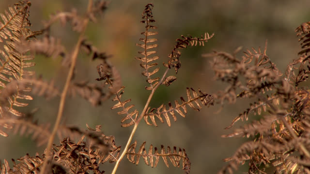 close up of bracken in autumn - johnfscott stock videos & royalty-free footage