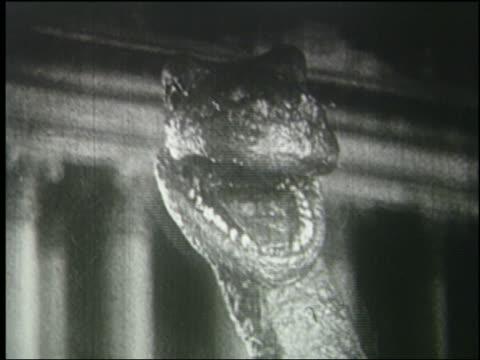 b/w 1925 close up of brontosaurus roaring - 1925 stock videos & royalty-free footage