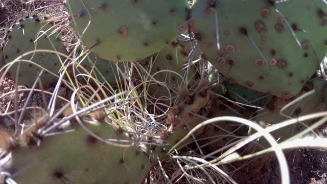 砂漠の風景の中でサボテンのクローズアップ - とげのある点の映像素材/bロール