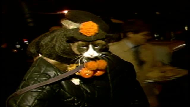 vidéos et rushes de close up of cat in vest and hat - 1985