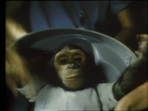 vidéos et rushes de close up of chimpanzee astronaut - chimpanzé