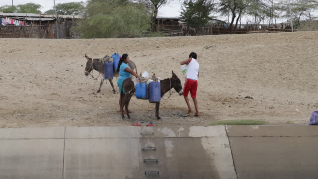 close up of collecting water at a canal manually with the help of a plastic bucket a few canisters and a donkey - esel stock-videos und b-roll-filmmaterial