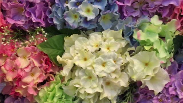 vídeos y material grabado en eventos de stock de primer plano de una hermosa hortensia bush - hortensia