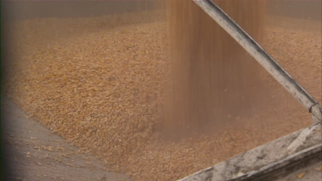 vídeos de stock, filmes e b-roll de close up of corn kernels being loaded into truck. - carregando
