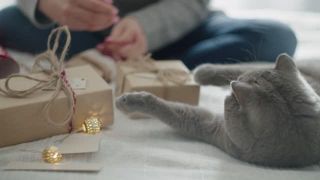 vidéos et rushes de fermez-vous vers le haut de couple de femmes et un chat enveloppant des cadeaux de noël à la maison. atelier à la maison pendant la pandémie covide-19. la nouvelle normalité. - animal family