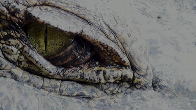 stockvideo's en b-roll-footage met close-up van oog van de krokodil - reptiel